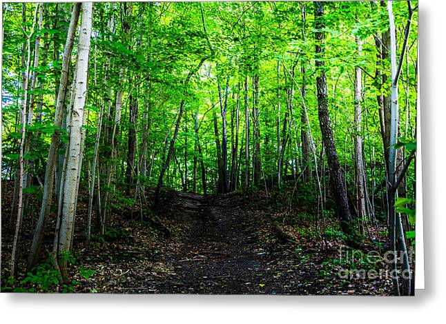 Forest Pyrography Greeting Cards - Path Greeting Card by Olga Photography