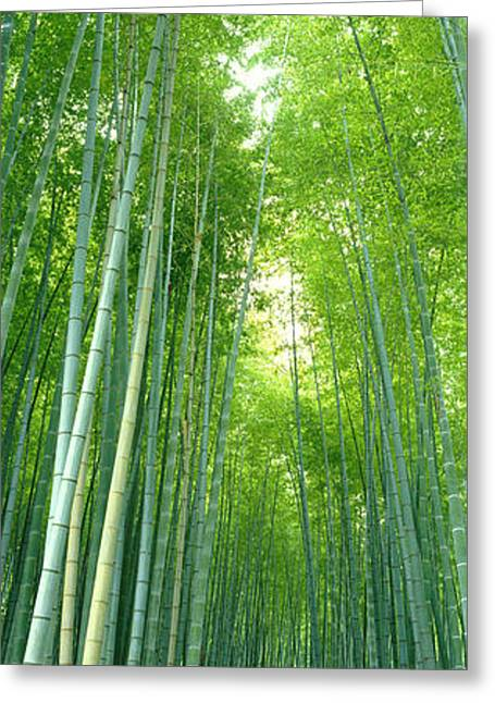 Path Through Bamboo Forest Kyoto Japan Greeting Card by Panoramic Images