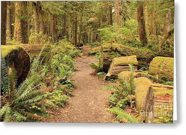 Moss Green Greeting Cards - Path through Mossy Forest Greeting Card by Carol Groenen