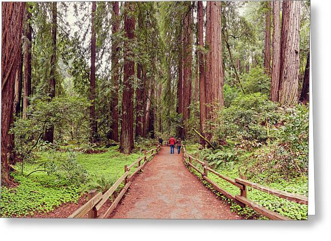 Path Through The Bohemian Grove At Muir Woods National Monument - Marin County California Greeting Card by Silvio Ligutti