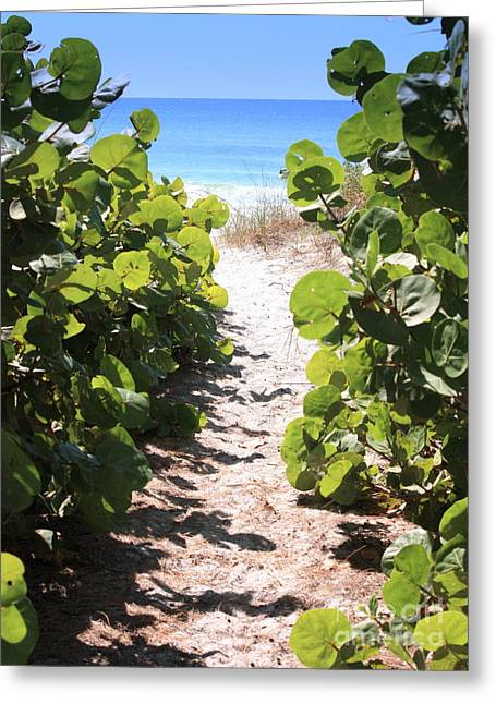 Blue Sky And Sand Greeting Cards - Path to Beach Greeting Card by Carol Groenen
