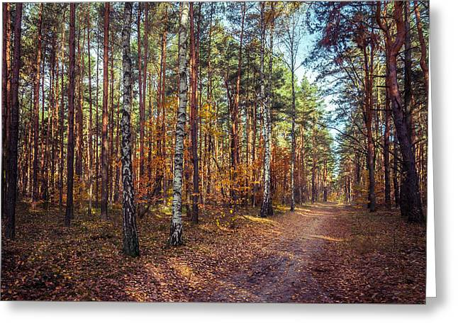 Fall Colors Greeting Cards - Pathway in the autumn forest Greeting Card by Dmytro Korol