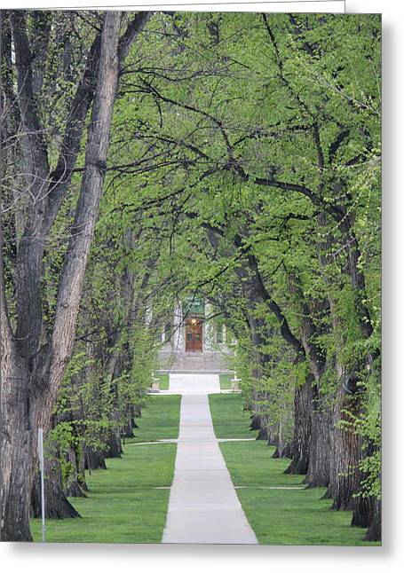 Csu Greeting Cards - Pathway In The Trees Greeting Card by Trent Mallett