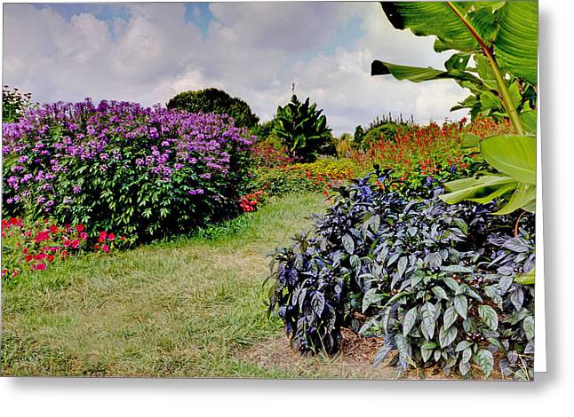 Popular Art Greeting Cards - Pathway to Rutgers Gardens Greeting Card by Geraldine Scull