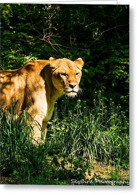 Pittsburgh Zoo Greeting Cards - Patience  Greeting Card by Megan Miller
