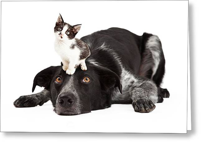 Full-length Portrait Photographs Greeting Cards - Patient Border Collie With Little Kitten on Head Greeting Card by Susan  Schmitz