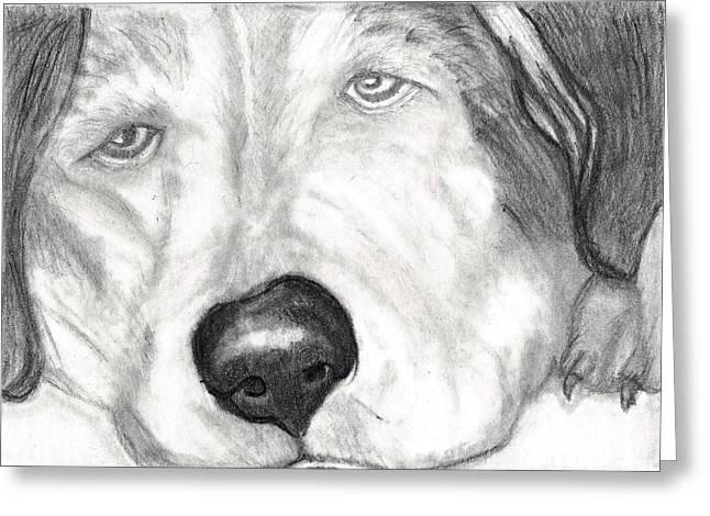 Huskies Drawings Greeting Cards - Patriot Greeting Card by Joy Neasley