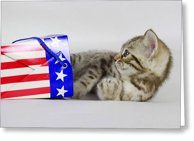 Red White And Blue Pyrography Greeting Cards - Patriotic Kitten Greeting Card by Shoal Hollingsworth