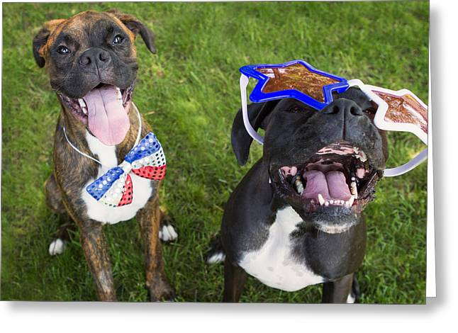 Patriotic Greeting Card Greeting Cards - Patriotic Pups Greeting Card by Stephanie McDowell