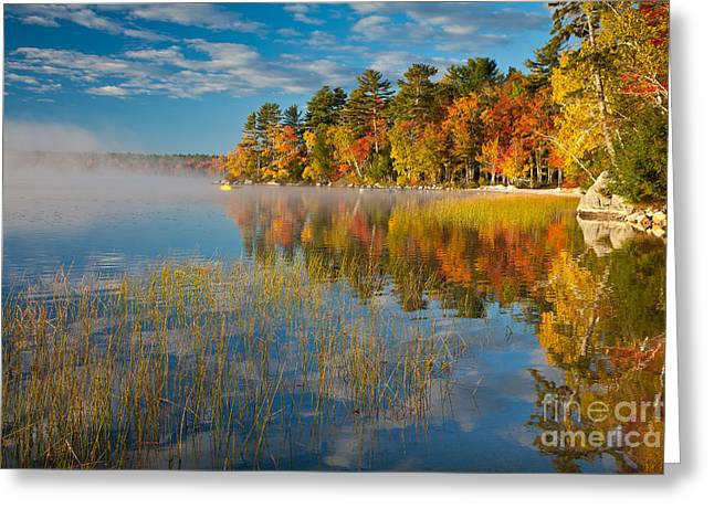 Wild And Scenic Greeting Cards - Patten Pond Greeting Card by Susan Cole Kelly