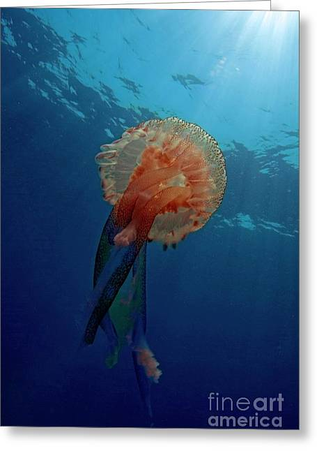 Luminescent Greeting Cards - Patterned Luminescent Jellyfish Greeting Card by Sami Sarkis