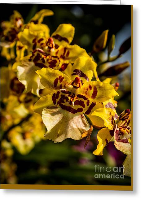 Patterned Orchids Greeting Card by Fiona Craig