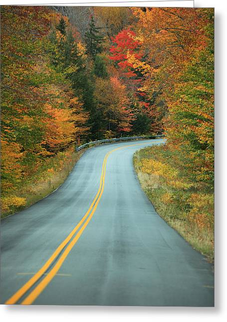 Fall Trees Greeting Cards - Paved Road Winding Through Autumn Trees Greeting Card by Ink and Main