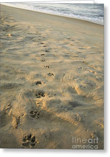 Dog Paw Print Greeting Cards - Paw Prints In The Sand Greeting Card by Roberto Westbrook