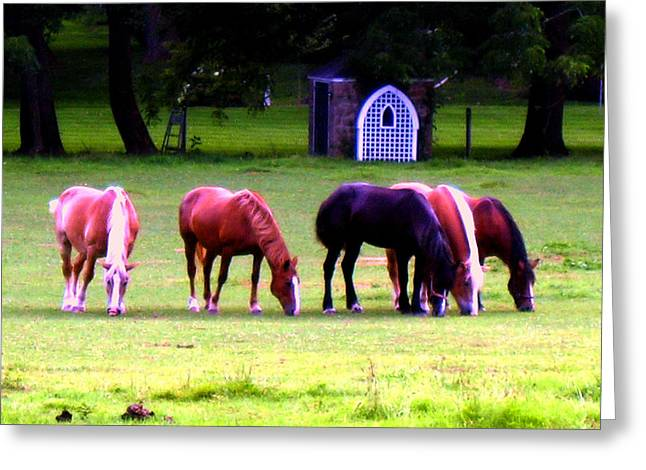 Solebury Farm Greeting Cards - Paxon Clydesdales Greeting Card by Kit Dalton