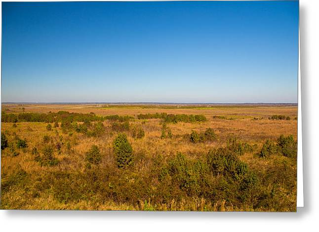 Payne Greeting Cards - Paynes Prairie Greeting Card by A Different Brian Photography