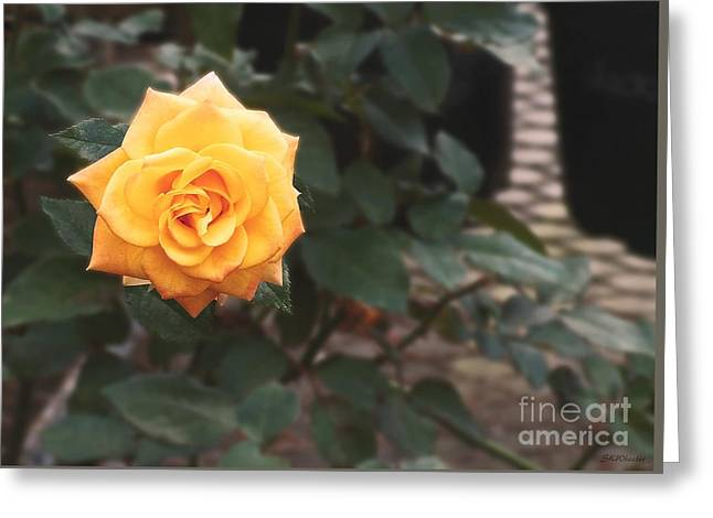 Gioia Greeting Cards - Peace Rose Porch Greeting Card by Sabrina Wheeler