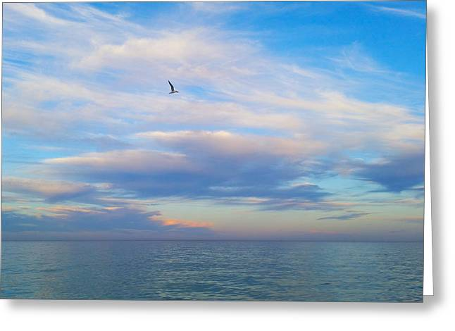 Tern Greeting Cards - Peaceful Anticipation Greeting Card by Marc Jager