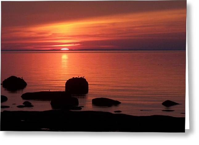 Sea Birds Greeting Cards - Peaceful reflections Greeting Card by Dan Comeau