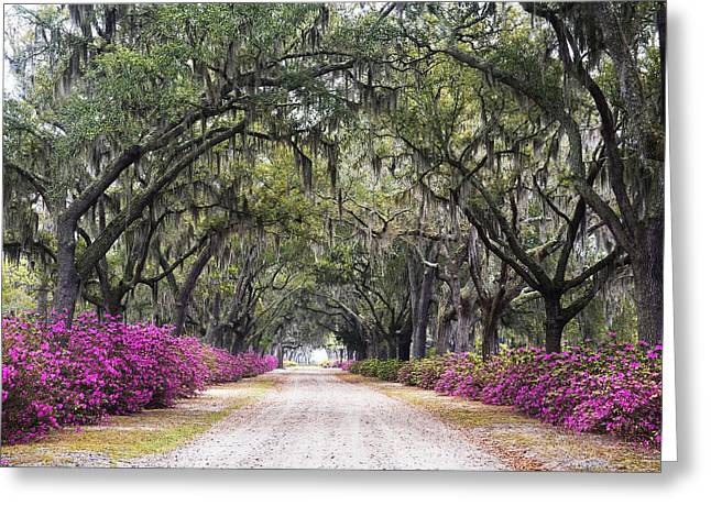 Azaleas Greeting Cards - Peaceful Resting Place Greeting Card by Eggers   Photography