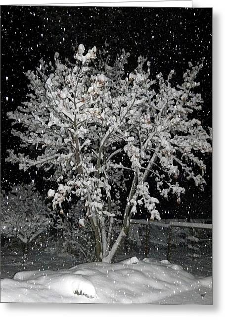 Flash Greeting Cards - Peaceful Snowfall Greeting Card by Will Borden