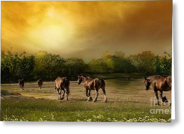 The Horse Greeting Cards - Peaceful Travels Greeting Card by Jacque The Muse Photography