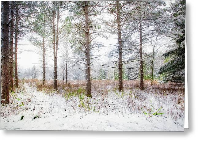 Peaceful Woods - Winter At Retzer Nature Center  Greeting Card by Jennifer Rondinelli Reilly - Fine Art Photography