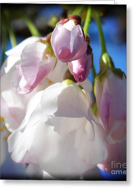 Peach Blossoms Upclose And Personal Greeting Card by Eva Thomas