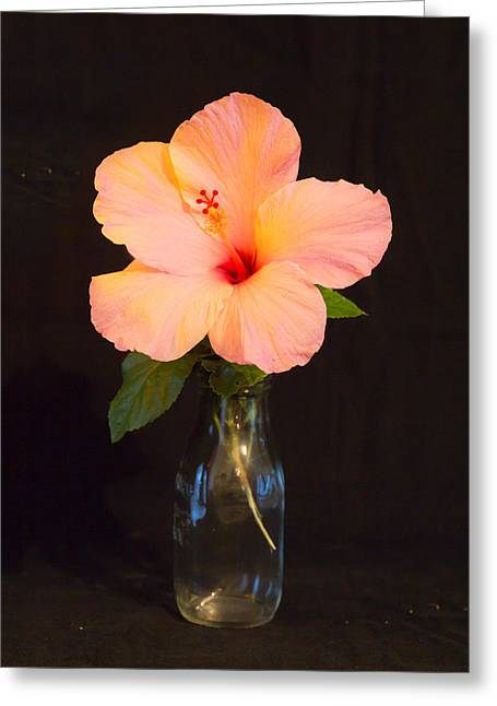 Artistic Photography Greeting Cards - Peach Hibiscus  Greeting Card by Darrell Hutto