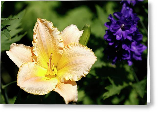 Day Lilly Greeting Cards - Peach Lily Greeting Card by Marilyn Hunt