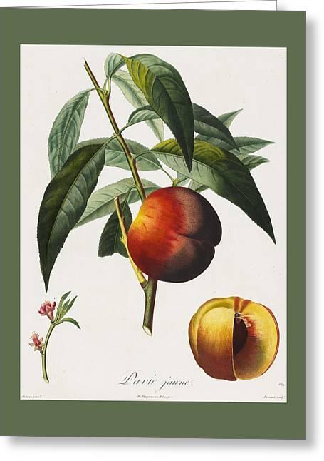 Peaches Greeting Card by Pierre Antoine Poiteau