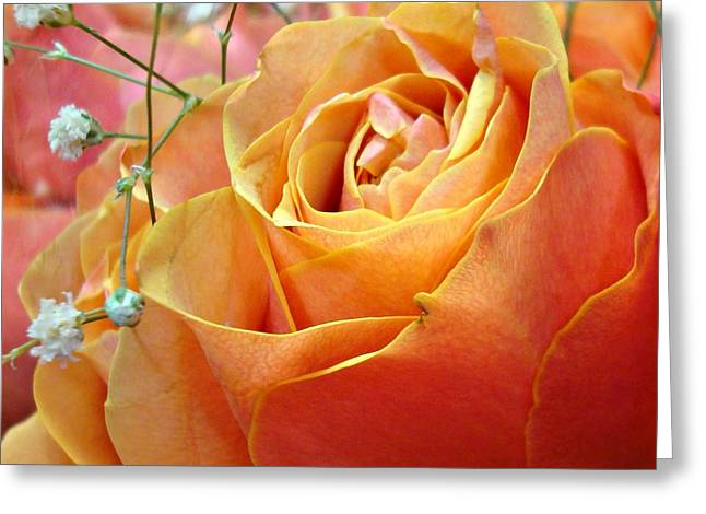 Rose Petals Greeting Cards - When I Dream Of You Greeting Card by Kathy Bucari