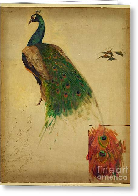 Kenyon Greeting Cards - Peacock Greeting Card by Celestial Images