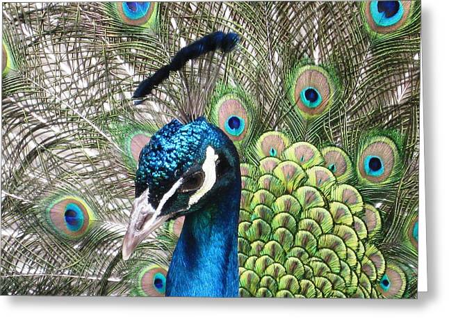 Morningside Heights Greeting Cards - The Biblical Garden Peacock of St. John the Divine Greeting Card by Charles Allen