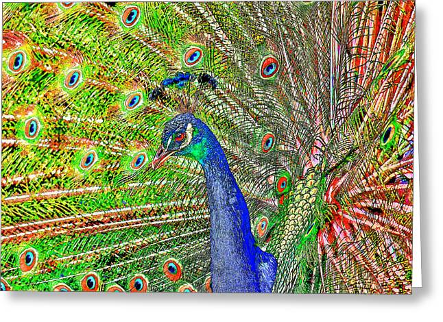 Tail Feather Greeting Cards - Peacock Fanned Tail Feathers Greeting Card by Tracie Kaska