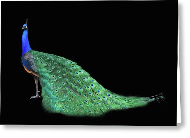Peacock Feathers Greeting Card by Steven Michael