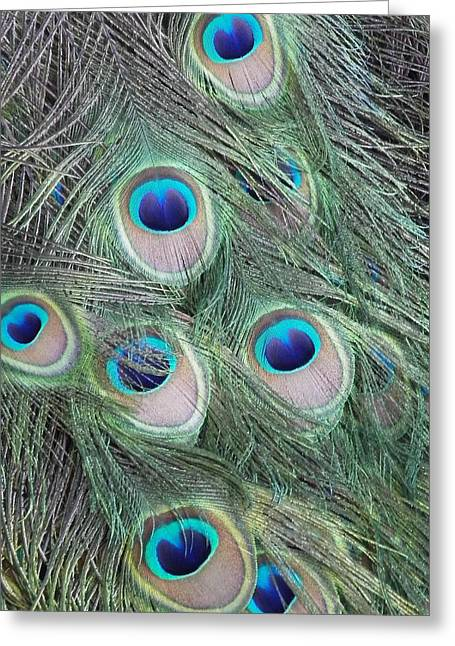 Birds Reliefs Greeting Cards - Peacock Greeting Card by Jim  Cooper