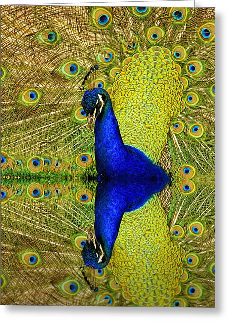 Popular Art Greeting Cards - Peacock Mirror Greeting Card by Geraldine Scull