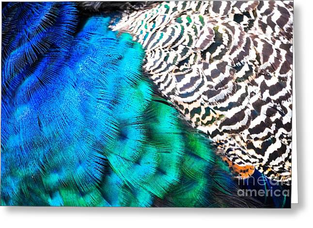 Pen Greeting Cards - Peacock Palette Greeting Card by Lisa Kilby