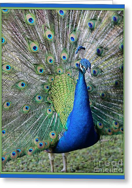 Peacock Plumage With Border Greeting Card by Carol Groenen