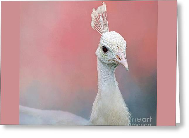 Peacock Portrait On Pink Greeting Card by Kaye Menner