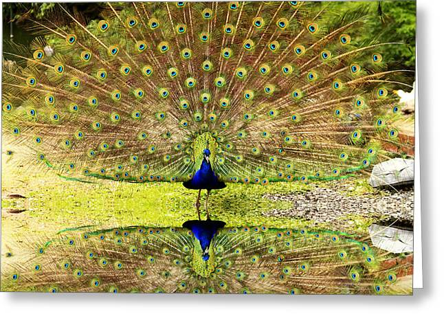 Popular Art Greeting Cards - Peacock Reflection Greeting Card by Geraldine Scull