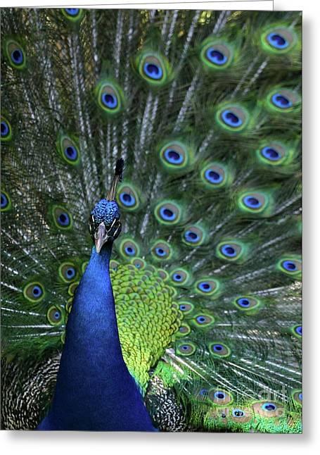 Peacock Greeting Card by Sabrina L Ryan