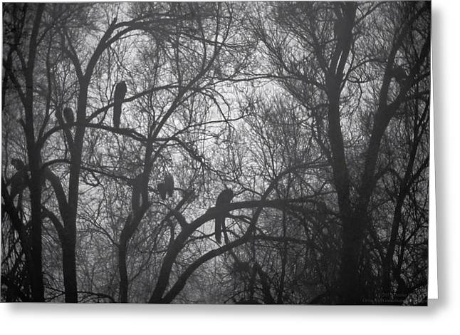 Nature Abstract Greeting Cards - Peacocks In The Mist bw Greeting Card by Denise Dube