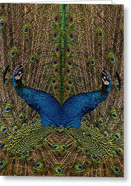 Punjab Greeting Cards - Peacocks Greeting Card by Jack Zulli