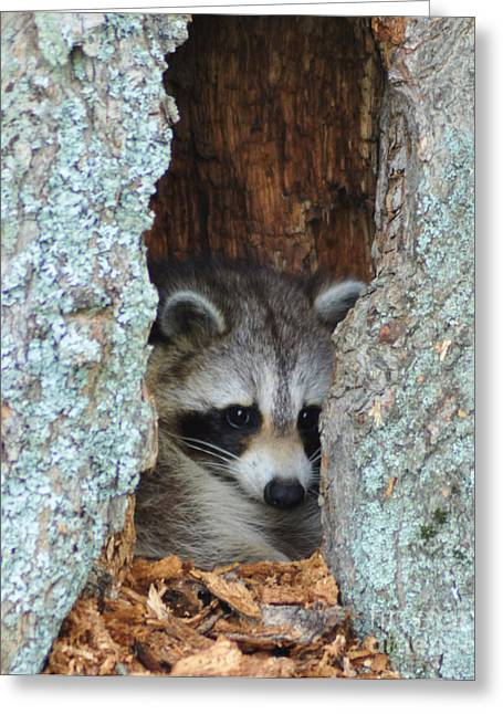 Hiding Greeting Cards - Peak a Boo Greeting Card by Diane E Berry