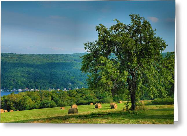 Pear Tree And Hayfield Greeting Card by Steven Ainsworth