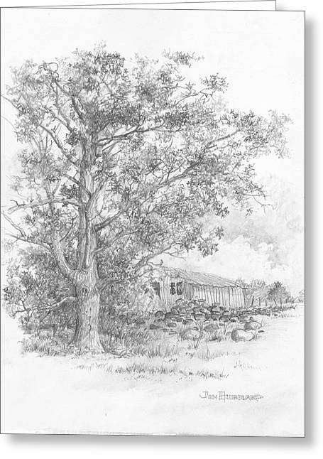 Jim Hubbard Greeting Cards - Pecan Tree Greeting Card by Jim Hubbard
