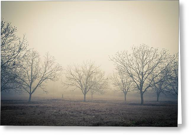 Lindsay Greeting Cards - Pecan Trees Greeting Card by A Different Brian Photography