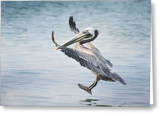 Pelican Landing Greeting Cards - Pedal To The Metal Greeting Card by Fraida Gutovich